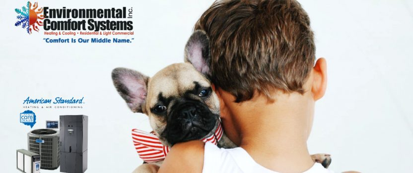 Tips for Improving Indoor Air Quality for Pet Owners