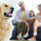 Air Purification Solutions for Pet Owners